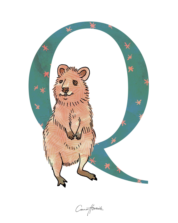 Q Quokka