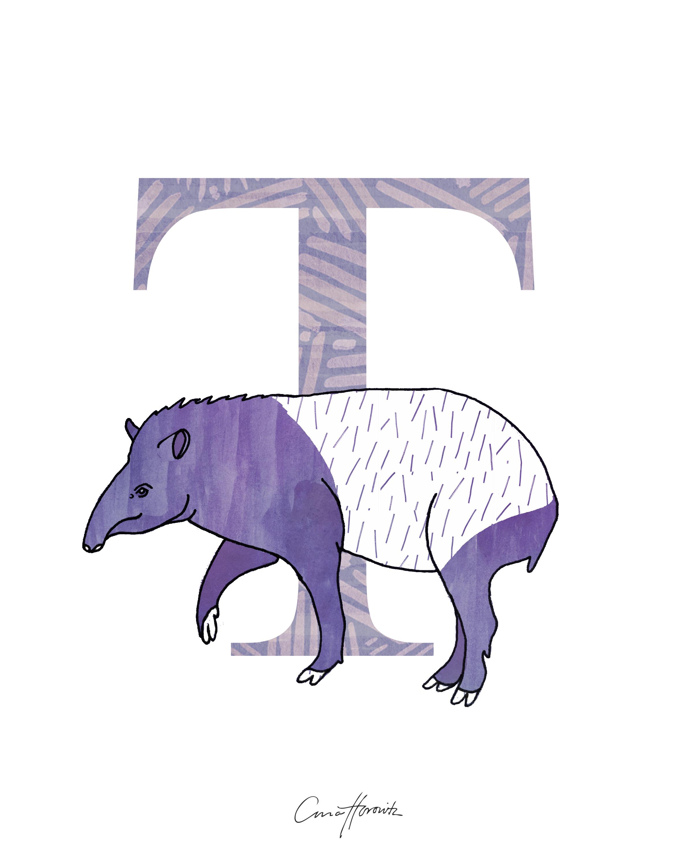 T Tapir
