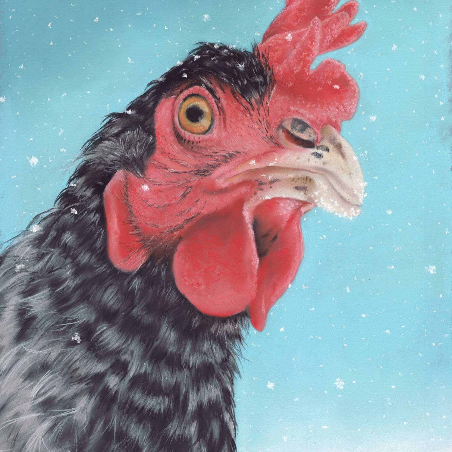 Winter-Hen-Square.jpg