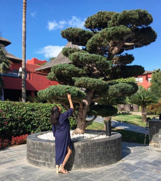 The 140 year old Bonsai Tree.