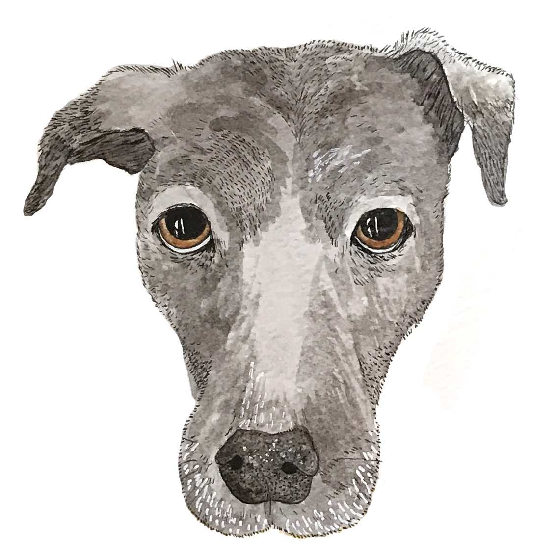 lana dog custom pet portrait.jpg