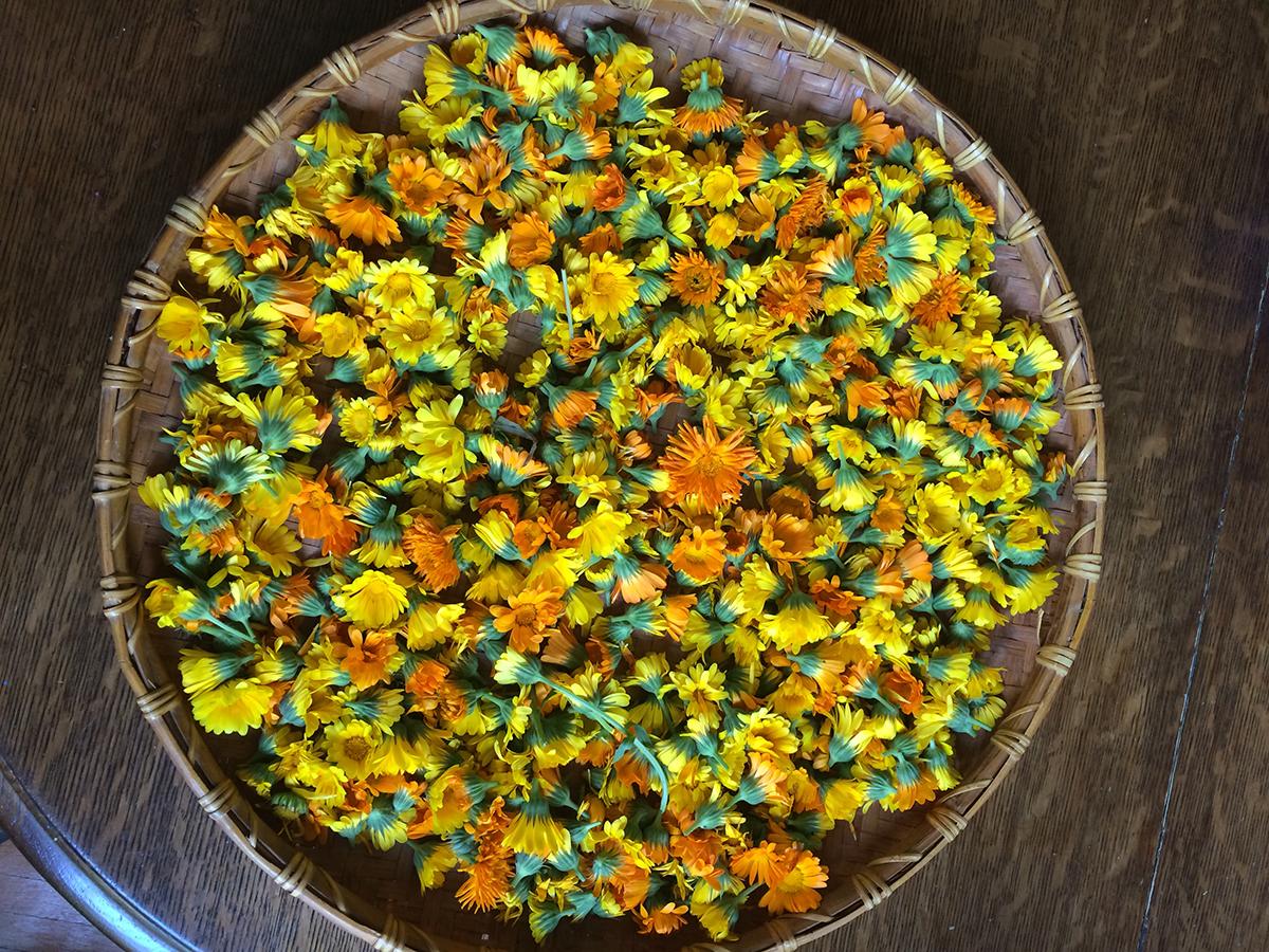calendula-flowers-herbal.jpg