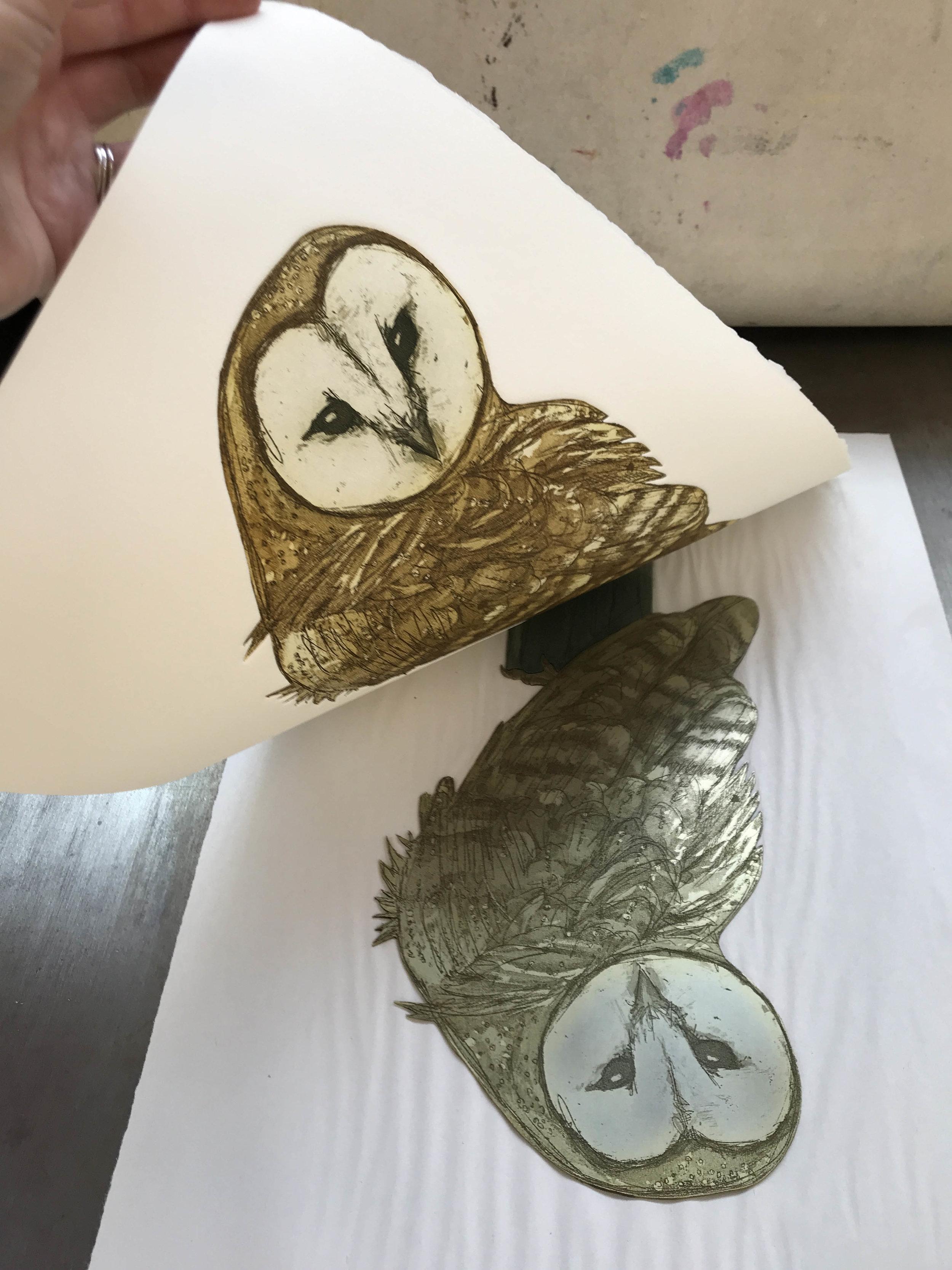 barn owl reveal 1 small.jpg