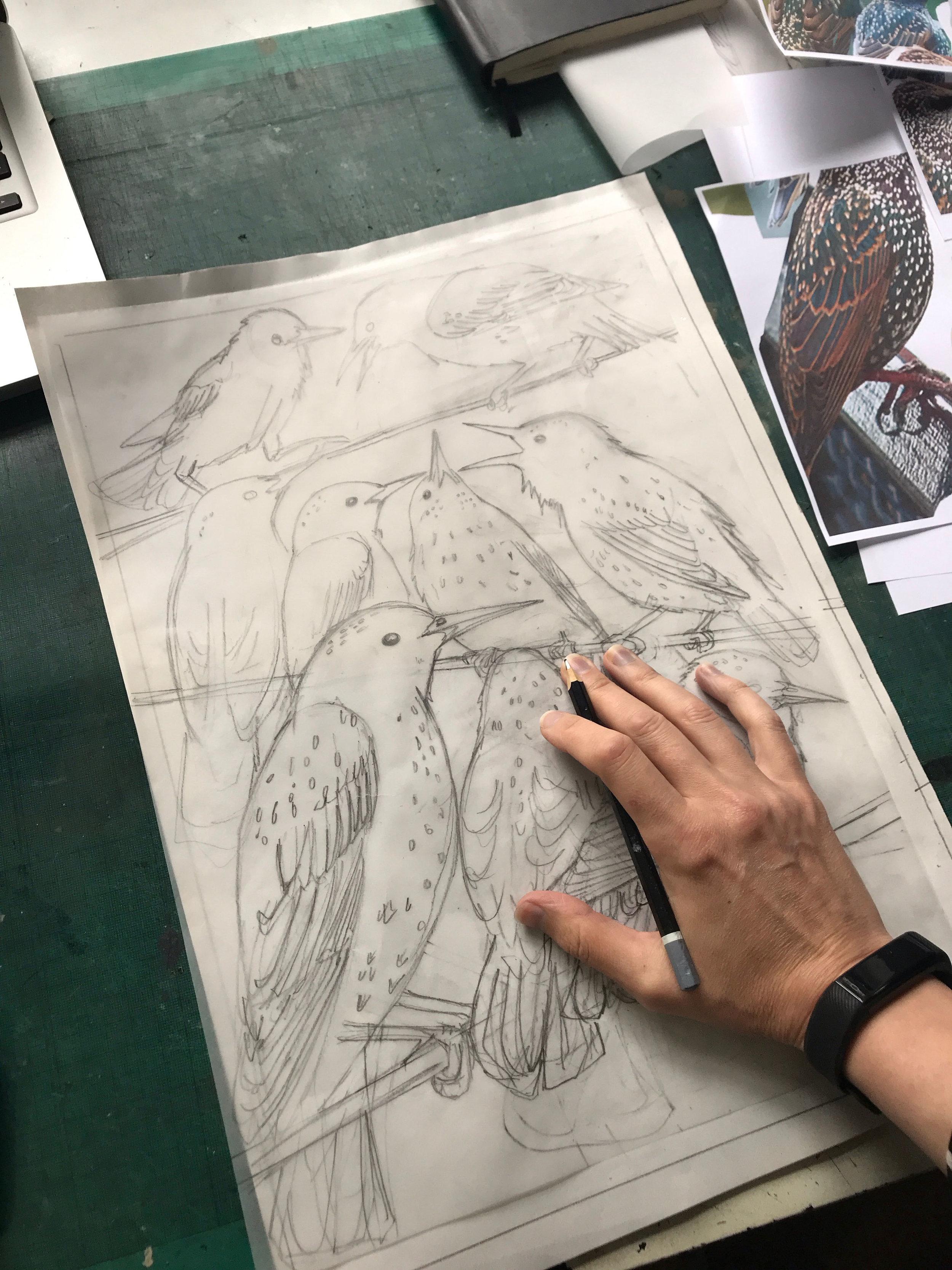 starling lino drawing small .jpg