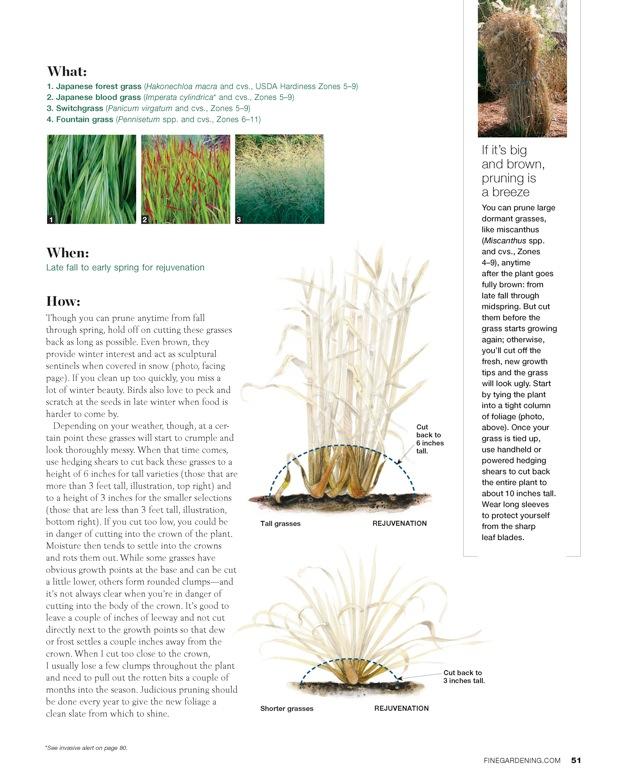 Tall grasses 1.jpeg