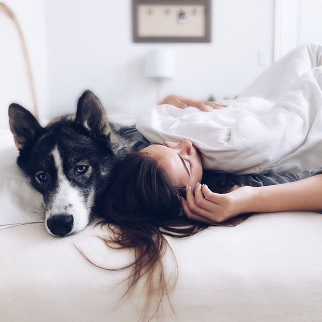 Who likes to sleep with their dog in bed? Having your pet in bed sure can be comforting but it also requires more maintenance in the cleaning department. Leave it to us and we will make sure with regular cleanings that your place is always looking it's best! . . , . . , . . . . . . #clean #cleaning #cleansing #cleanhouse #cleanup #cleanculture #cleaner #organize #organized #organizedhome #professionalorganizer #organizer #cleanfreak #cleanliving #tidyingup #tidy #tidyhome #homelife #family #women #men #lifestyle #springtime #springcleaning #greencleaning #interiors