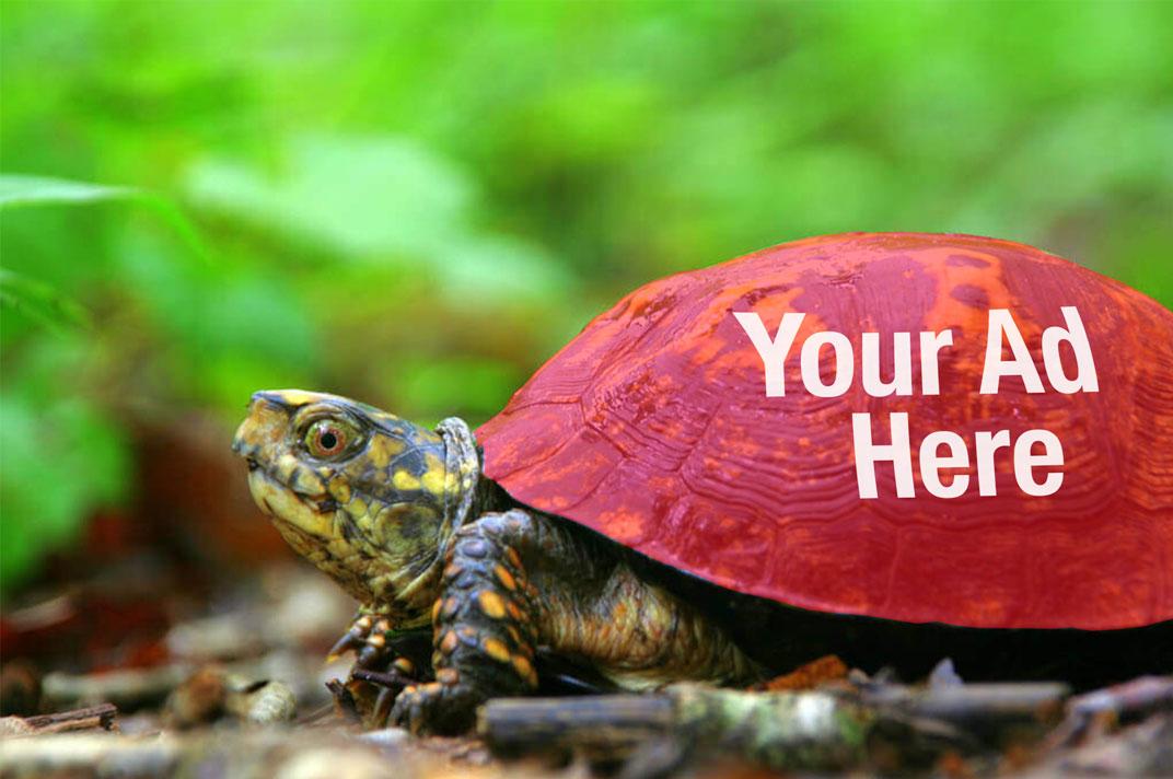 Turtle-a.jpg