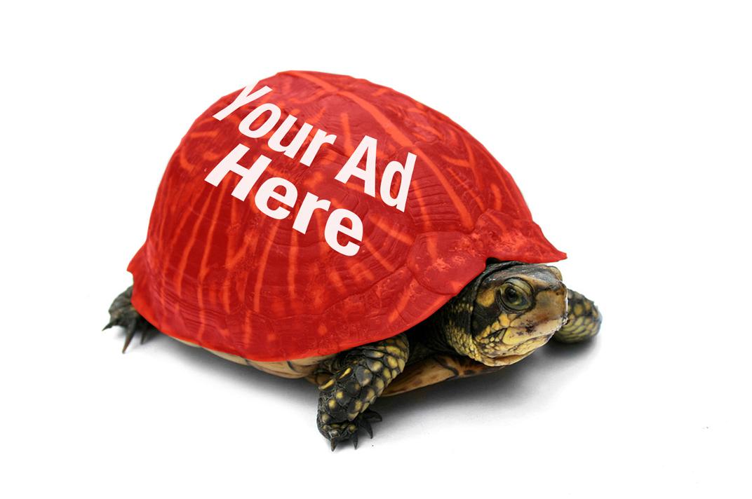 Turtle-b.jpg