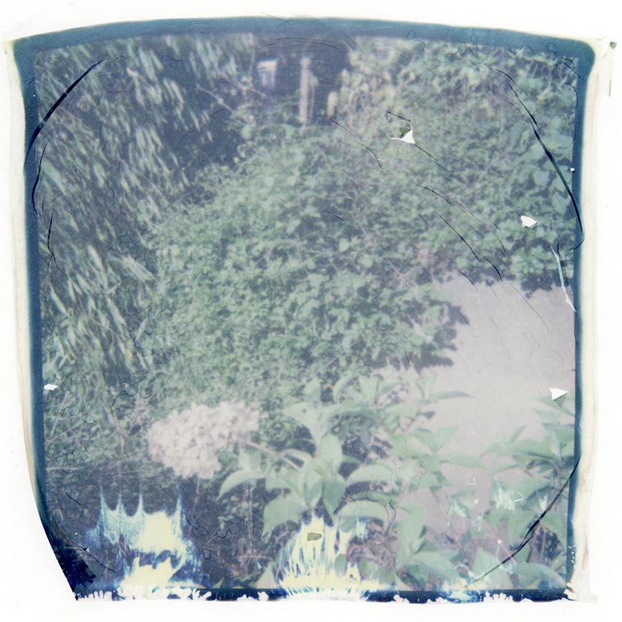 polaroid_transfer_025.jpg