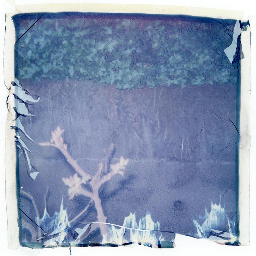 polaroid_transfer_027.jpg