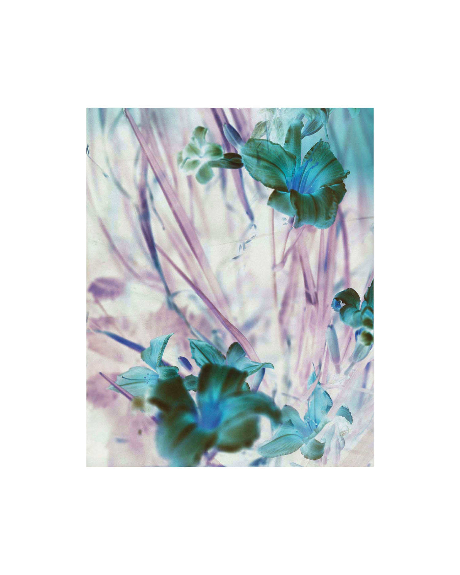 waespi_botanical1.jpg