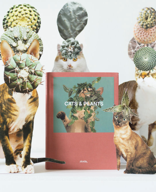 0102#Stephen Eichhorn Cats & Plants Book Release Party