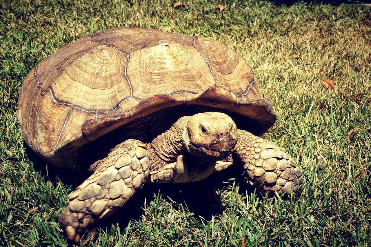 turtle-1204178_1920.jpg