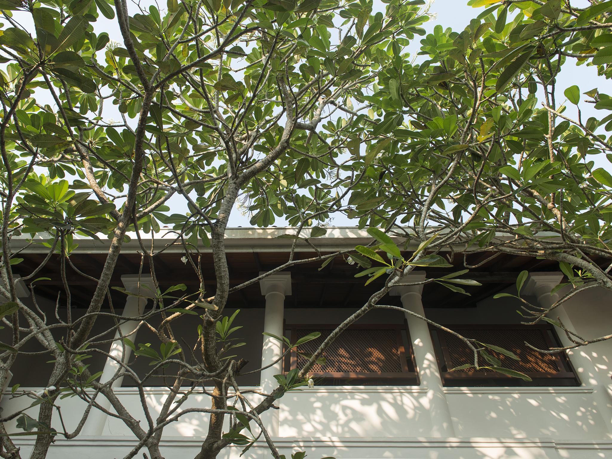 19-Ambassadors House-Galle - Courtyard tree canopy.jpg