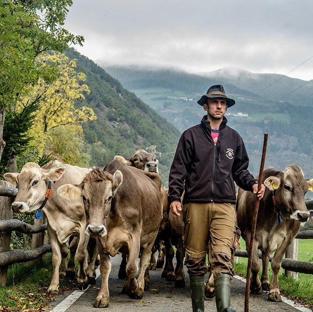 Trentino Alto-Adige/Südtirol: Ho conosciuto Günter Wallnofer un po' di anni fa, oltre ad essere un eccezionale allevatore è stato fautore di una forte iniziativa ambientalista, le sue mucche non avrebbero mai più pascolato  in zone che anche accidentalmente sarebbero potute essere contaminate da pesticidi o altre sostanze chimiche. Un altro esempio di eroe contemporaneo, un altra conferma che puntare la macchina fotografica altrove è un opera sociale non indifferente. (voce fuori campo e pioniera del racconto etico: @ritabrugnara) #foodphotographer #organicfood #trentinoaltoadige #agricolturaitalianadelnord #agricolturaitaliana #organicfood #alcenero #lattebio #provinciadibolzano #bolzen #pistaciclabilevalvenosta