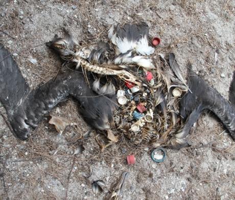 The Plastic Albatross