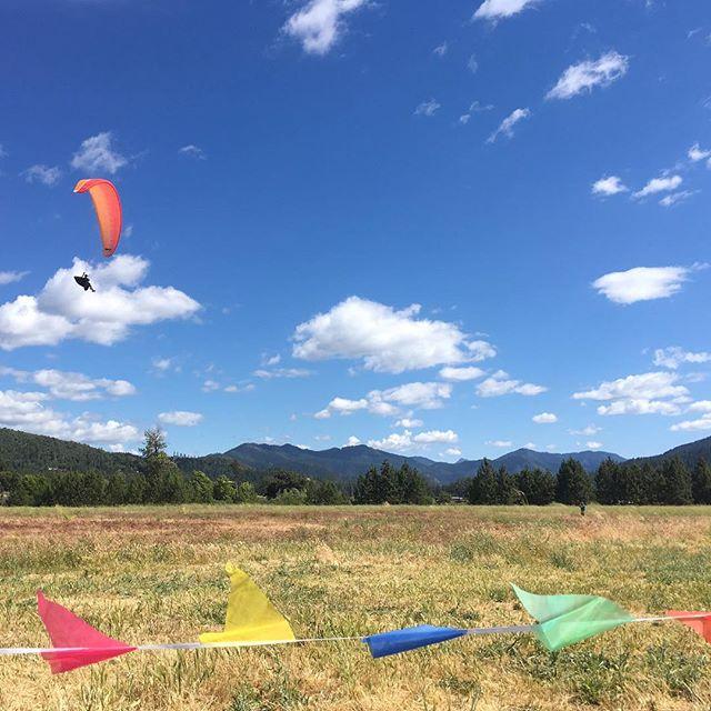 Soft landings after flying high. Final day of Applegate paragliding competition, finish at LongSword Vineyard. #flylikeabird #paragliding #longswordvineyard #saturday #safelanding