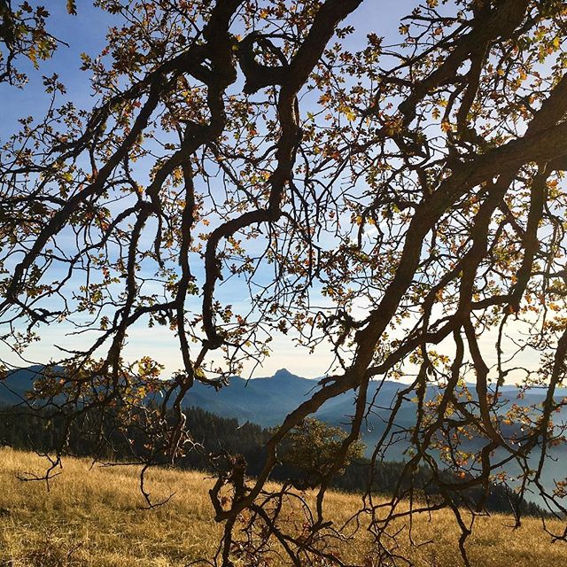 Escaped the valley fog, into autumn sunshine, trail smelling of beeswax and pine. #views #of #pilot #rock #always #make #me #smile #exploregon #getoutside #autumnsun #pilotrock