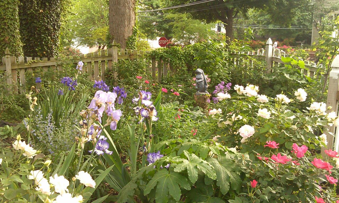 WildLife garden in the Spring