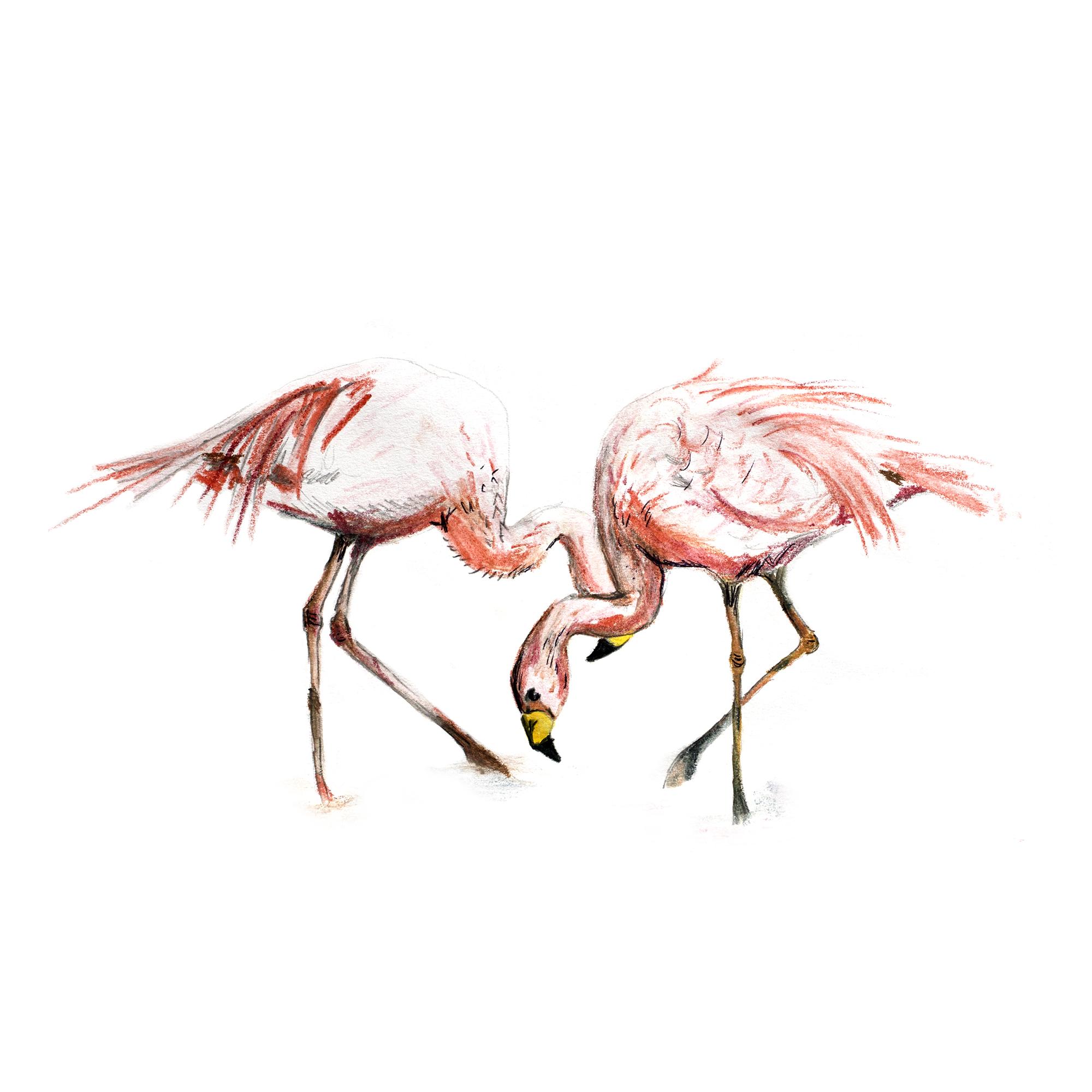 flamingos square.jpg
