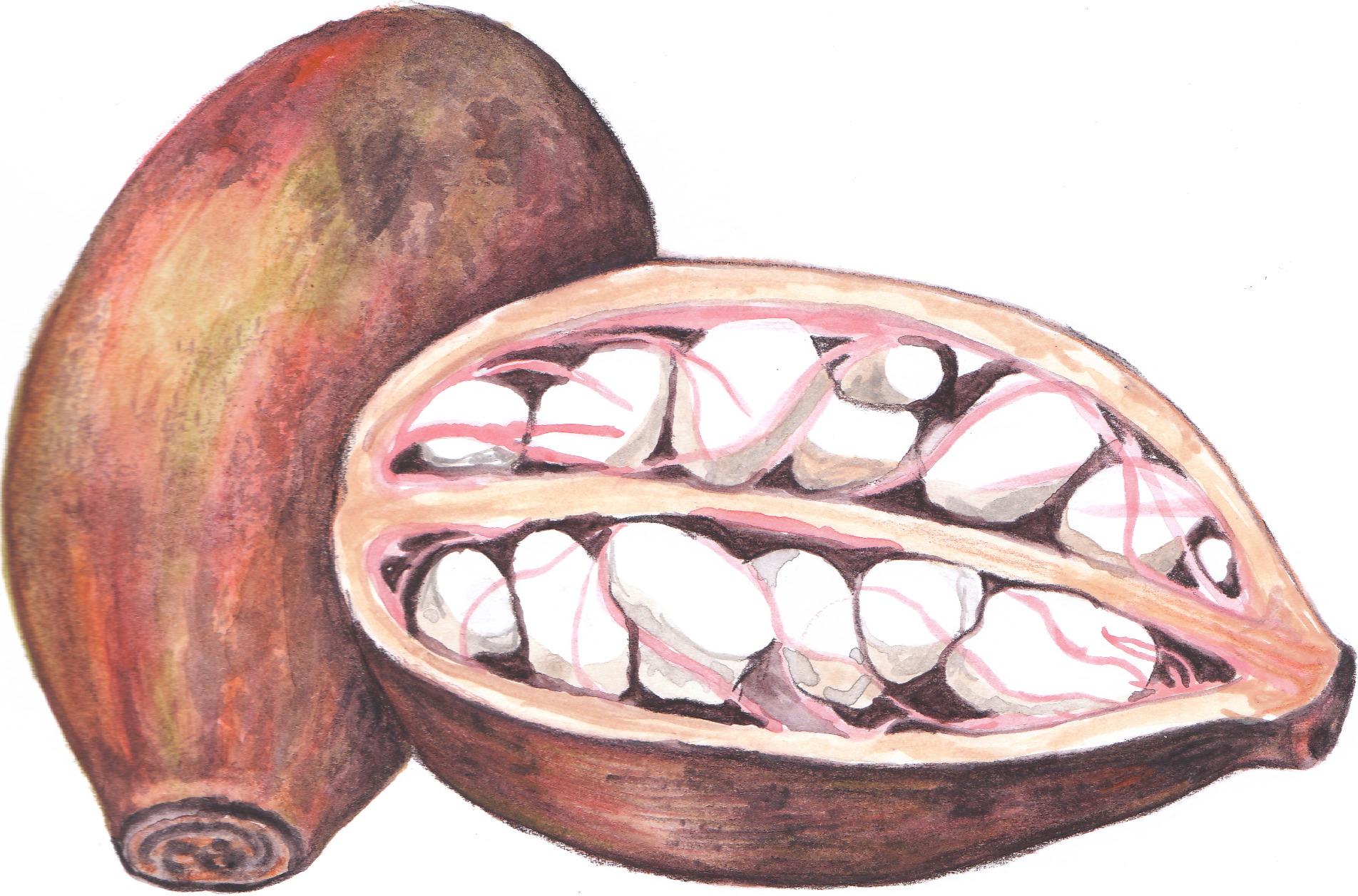 nur-shodjai-art-Baobab.jpg