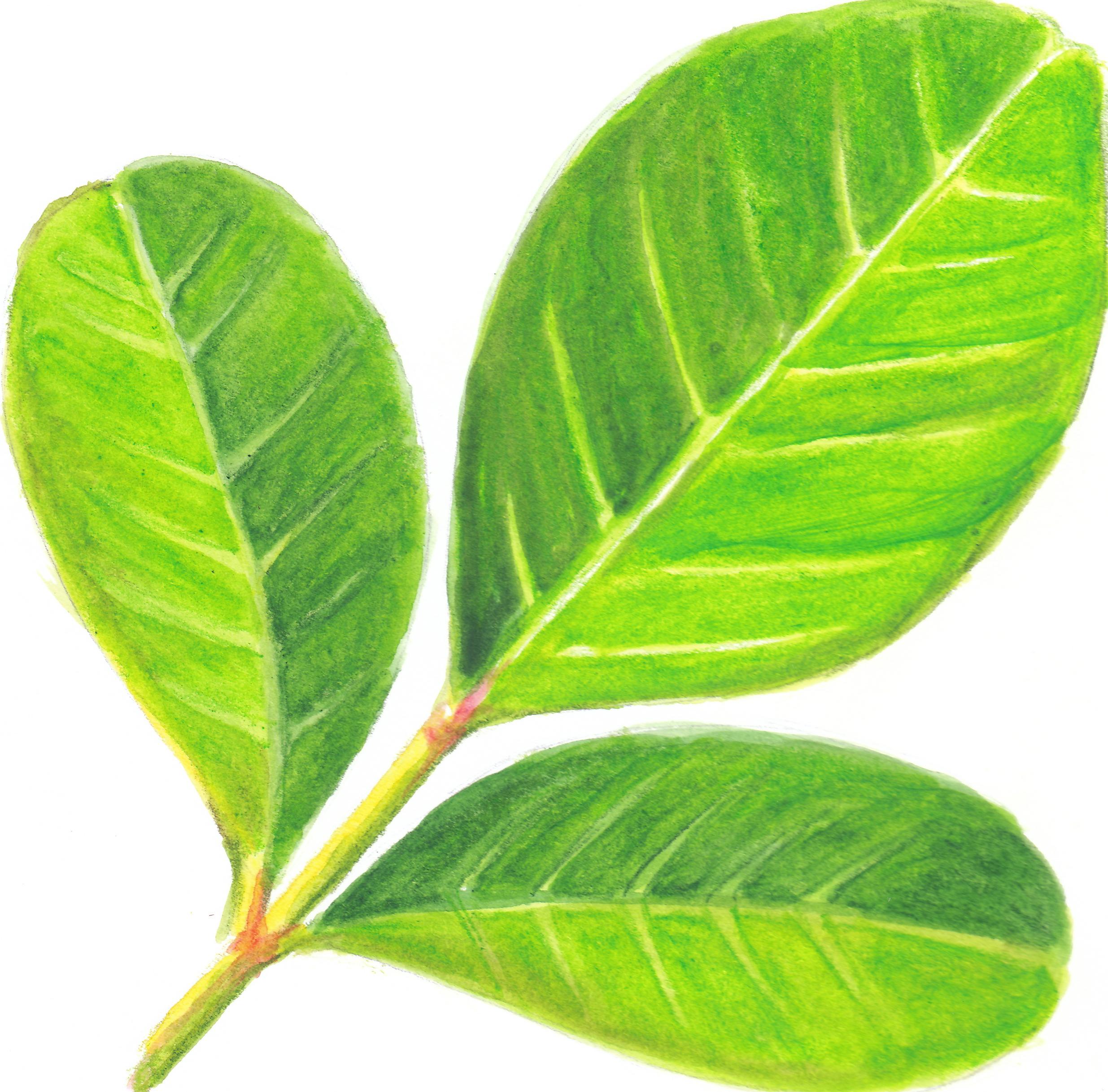 nur-shodjai-art-leaf.jpg