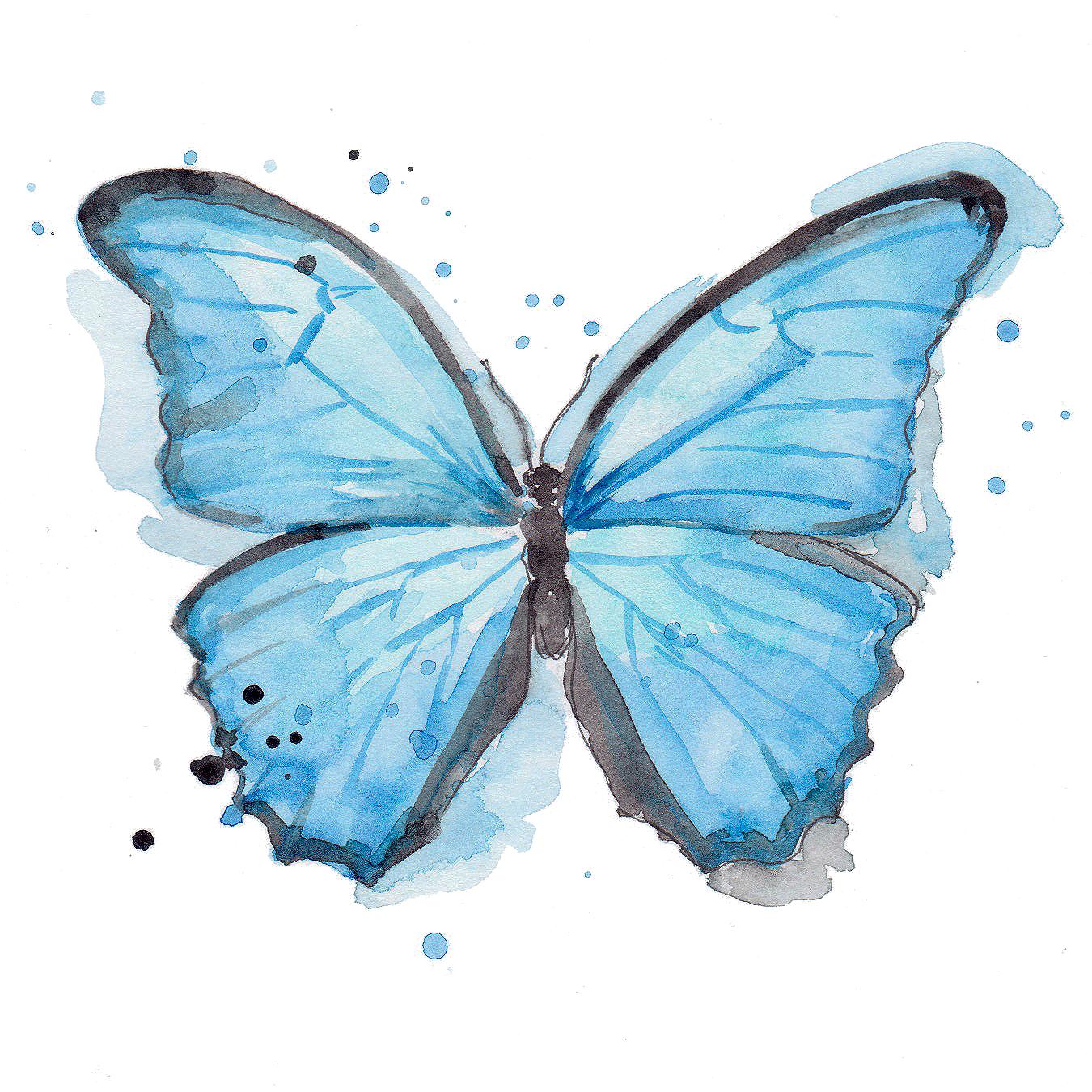Butterfly transparent.jpg