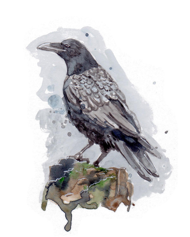Nature crow transparent.jpg