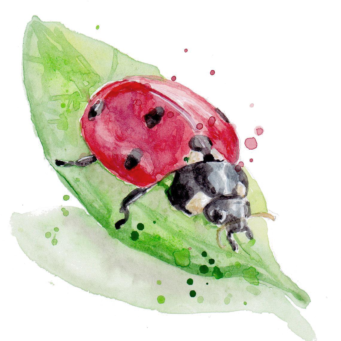 Nature ladybug transparent.jpg