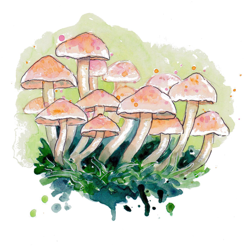 Nature mushrooms transparent.jpg