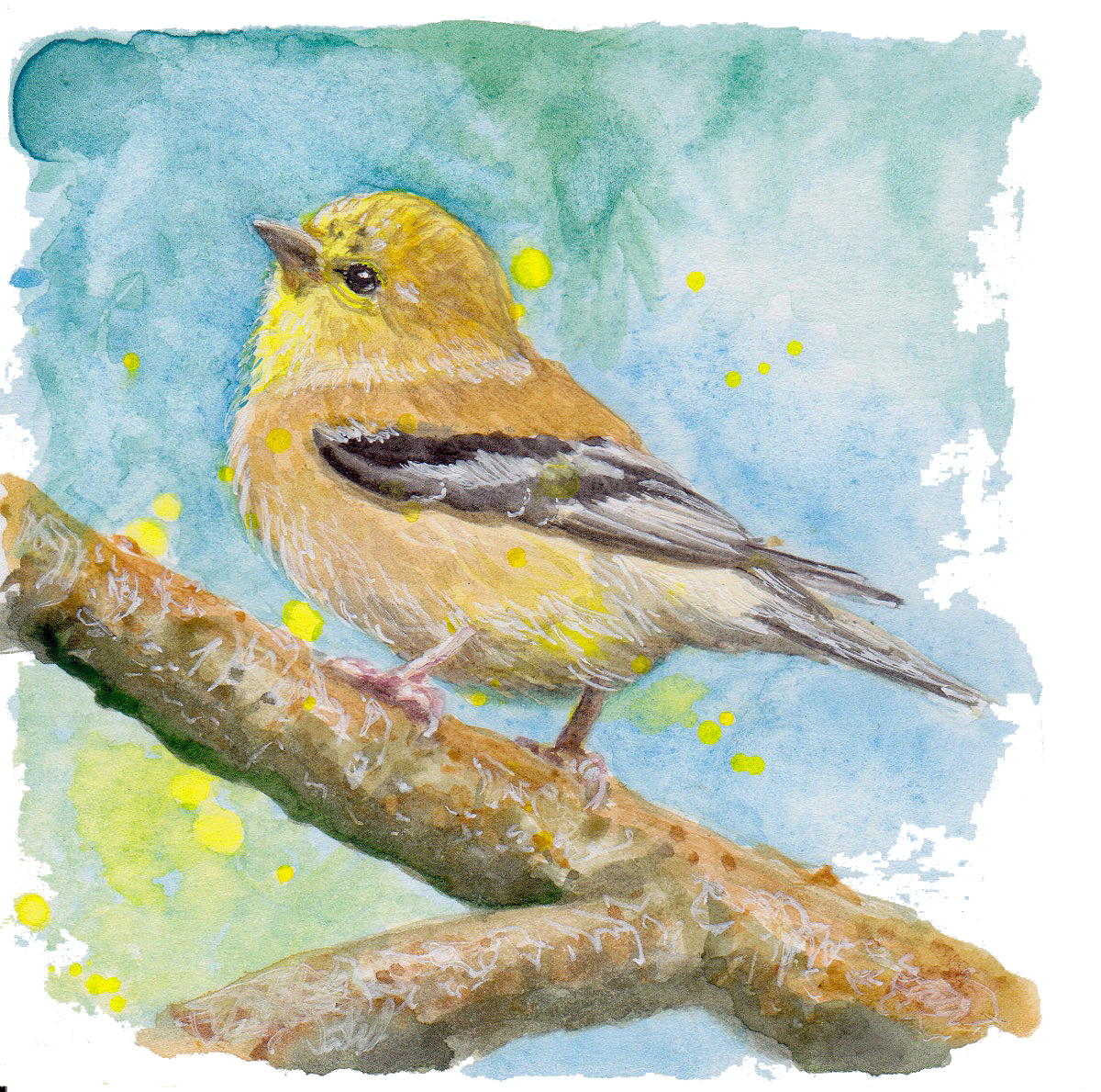 Nature Gold Finch transparent.jpg