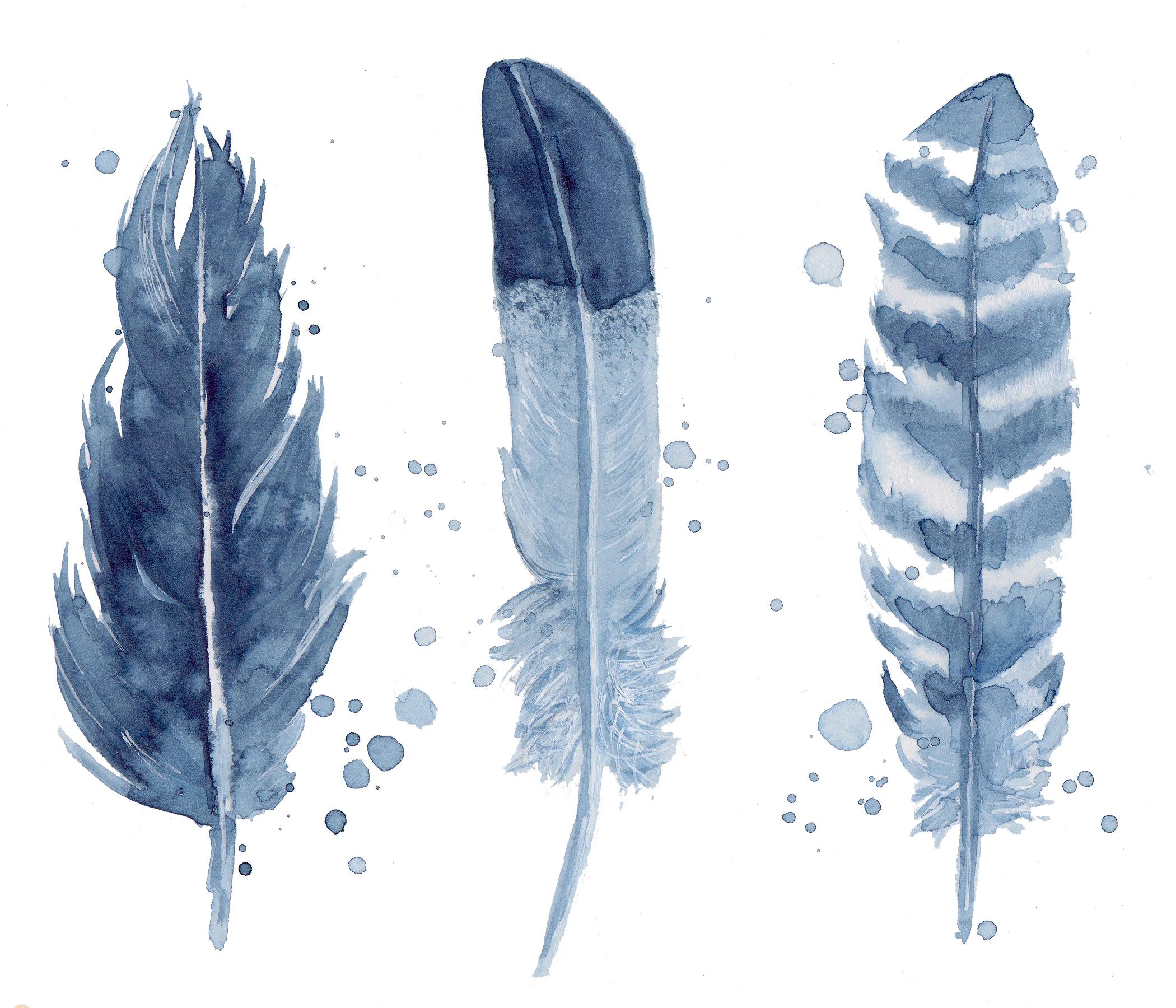 Nature feathers transparent.jpg