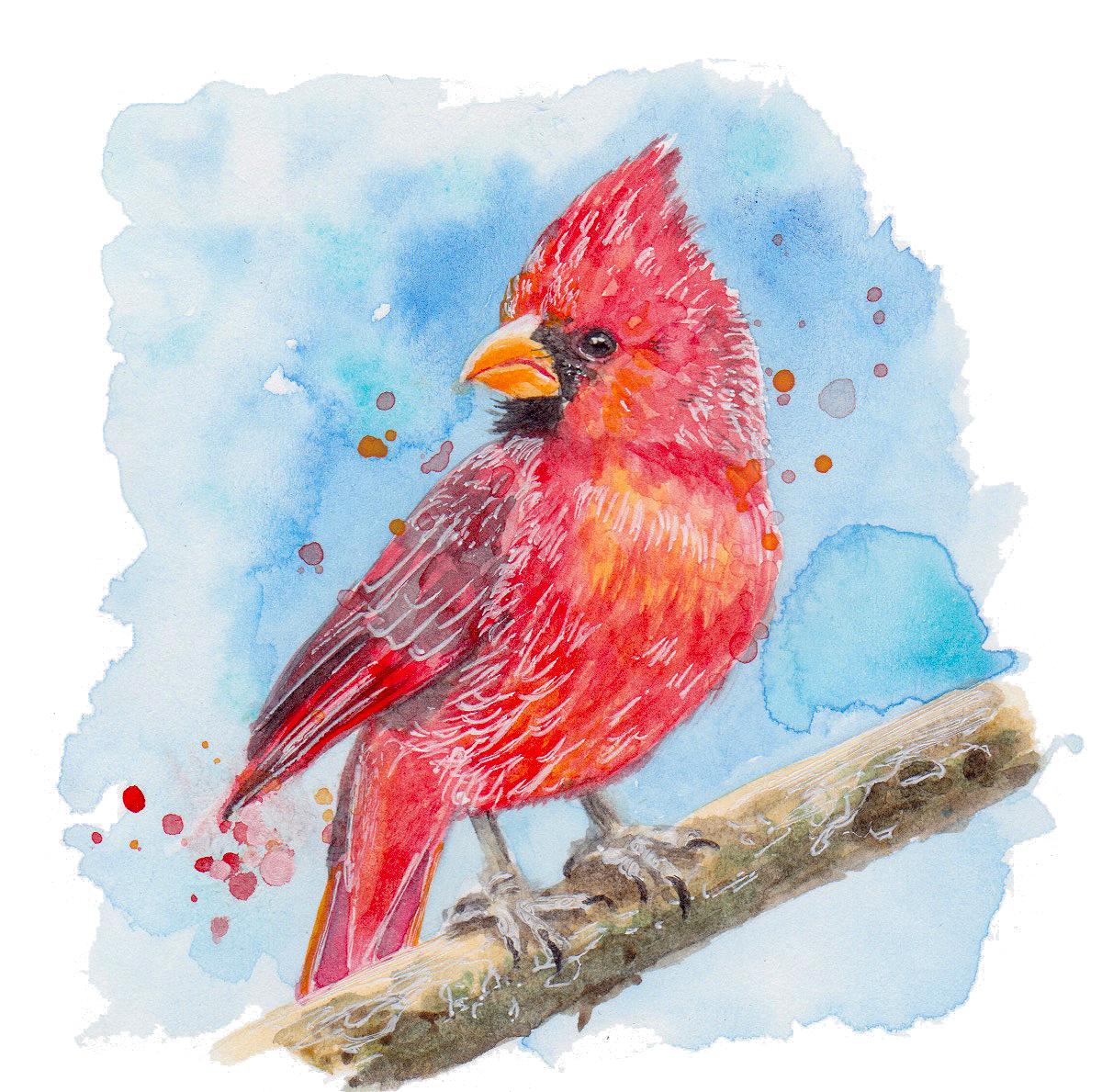 Nature Red Cardinal transparent.jpg