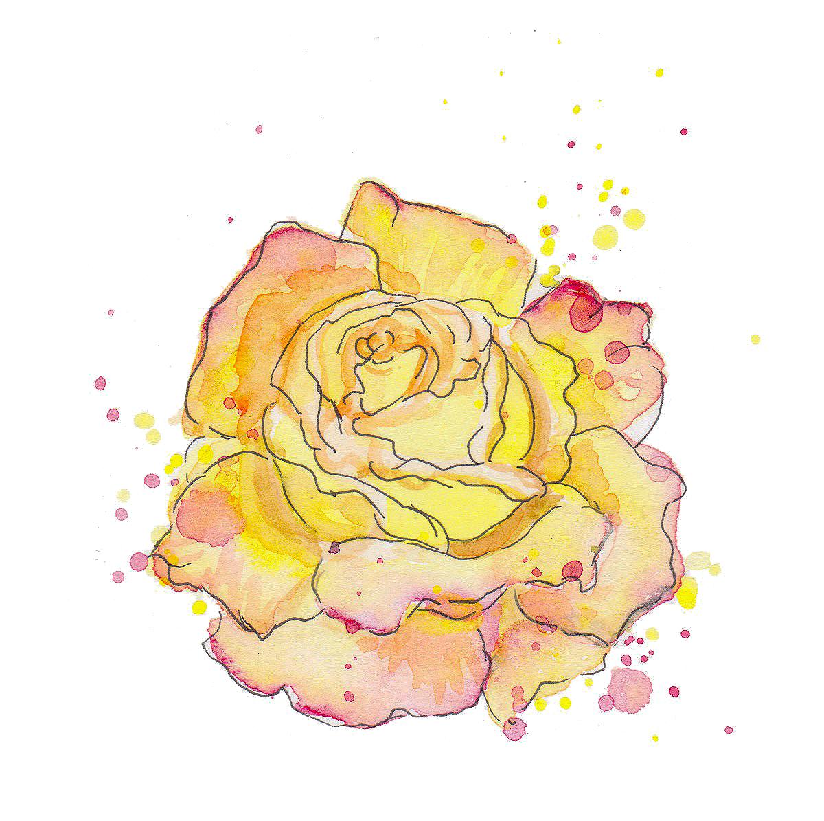 Nature Rose transparent.jpg