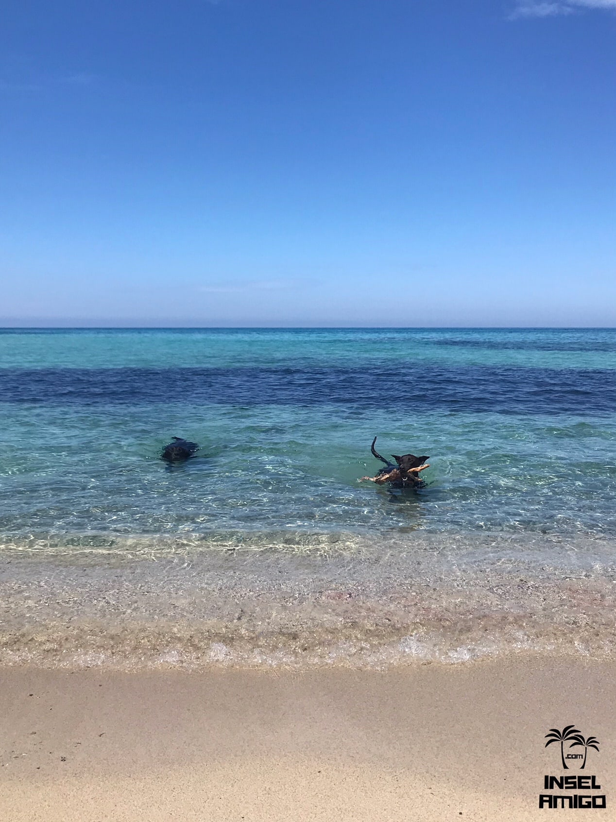 Lani und ihr Hundekumpel beim Schwimmen in der Cala Mitjana