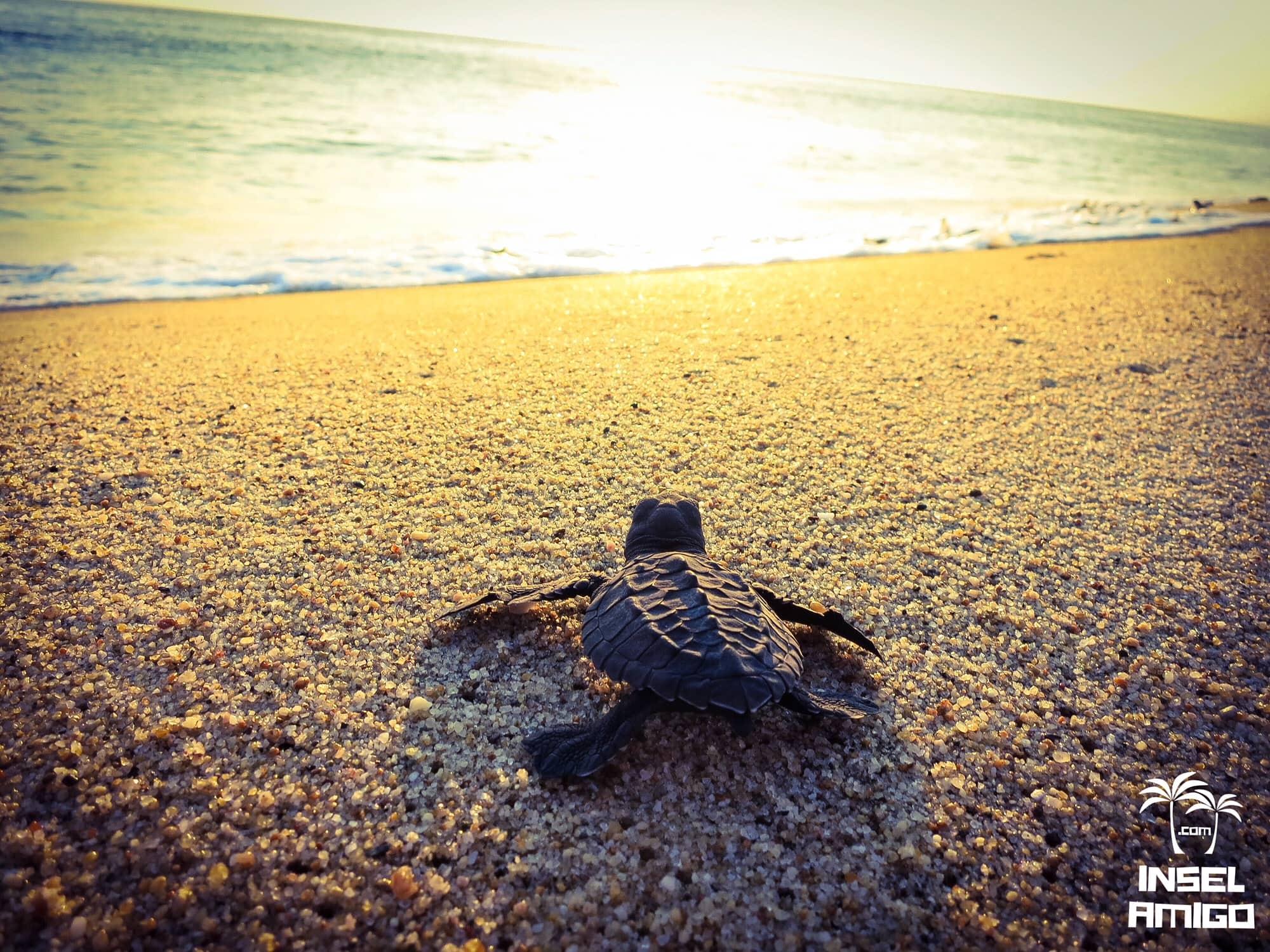 Baby Schildkröte am Strand in Mexico
