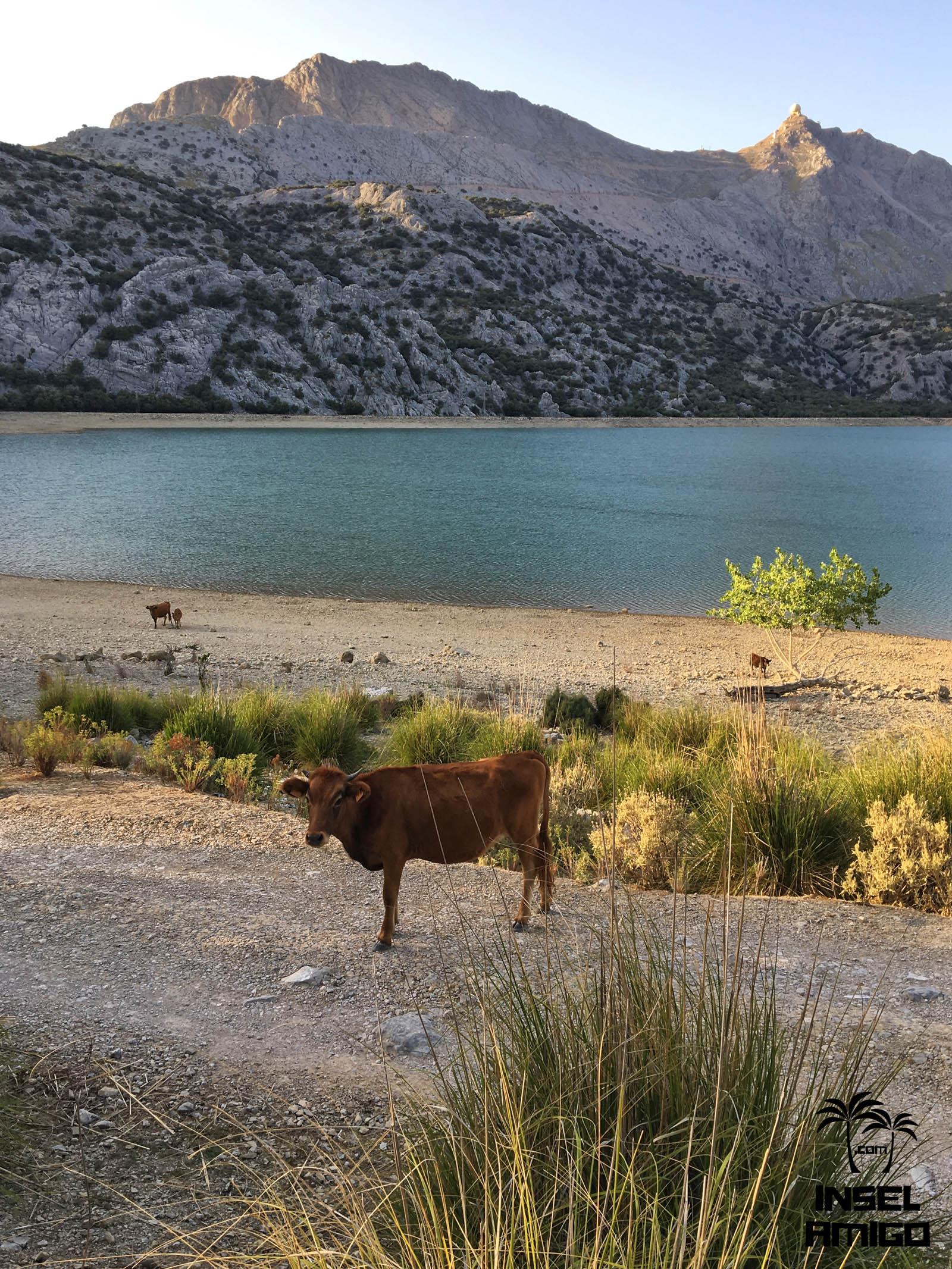 Hier gibt es viele Tiere wie z.B. Esel und Kühe antreffen