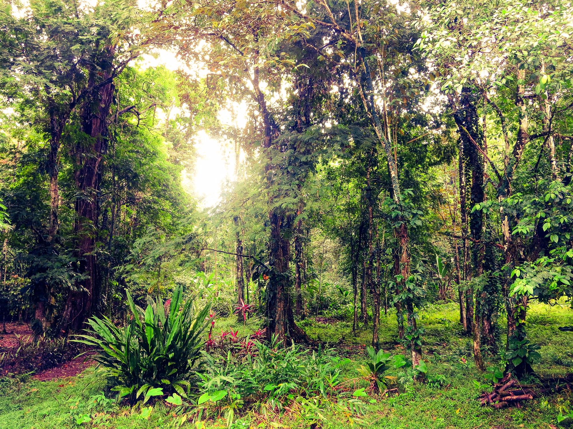 Ein wunderschöner Tropenwald in Costa Rica