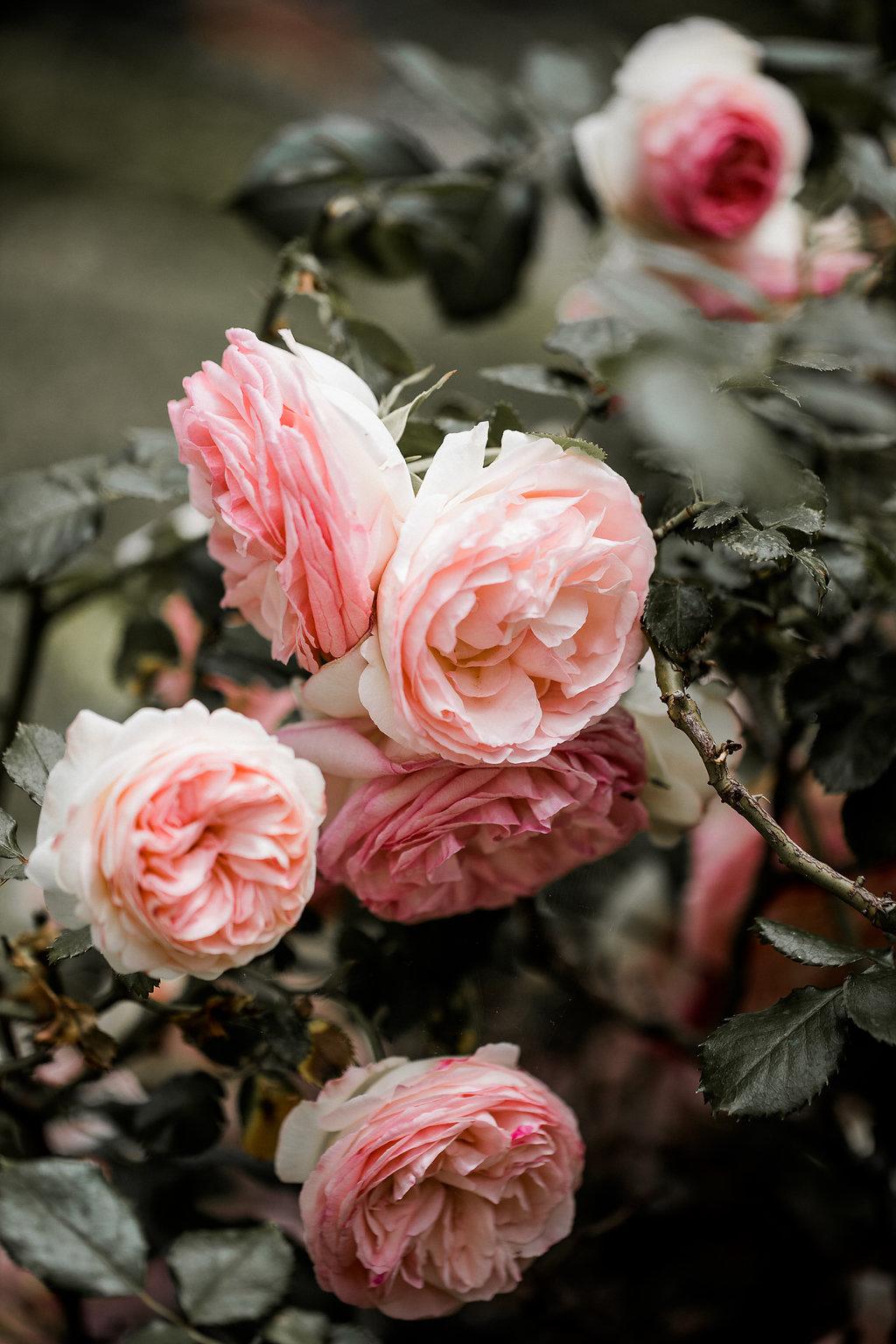 the Marthy's vintage garden wedding planner italy tuscany toscana portofino belmont splendido destination 2.jpg
