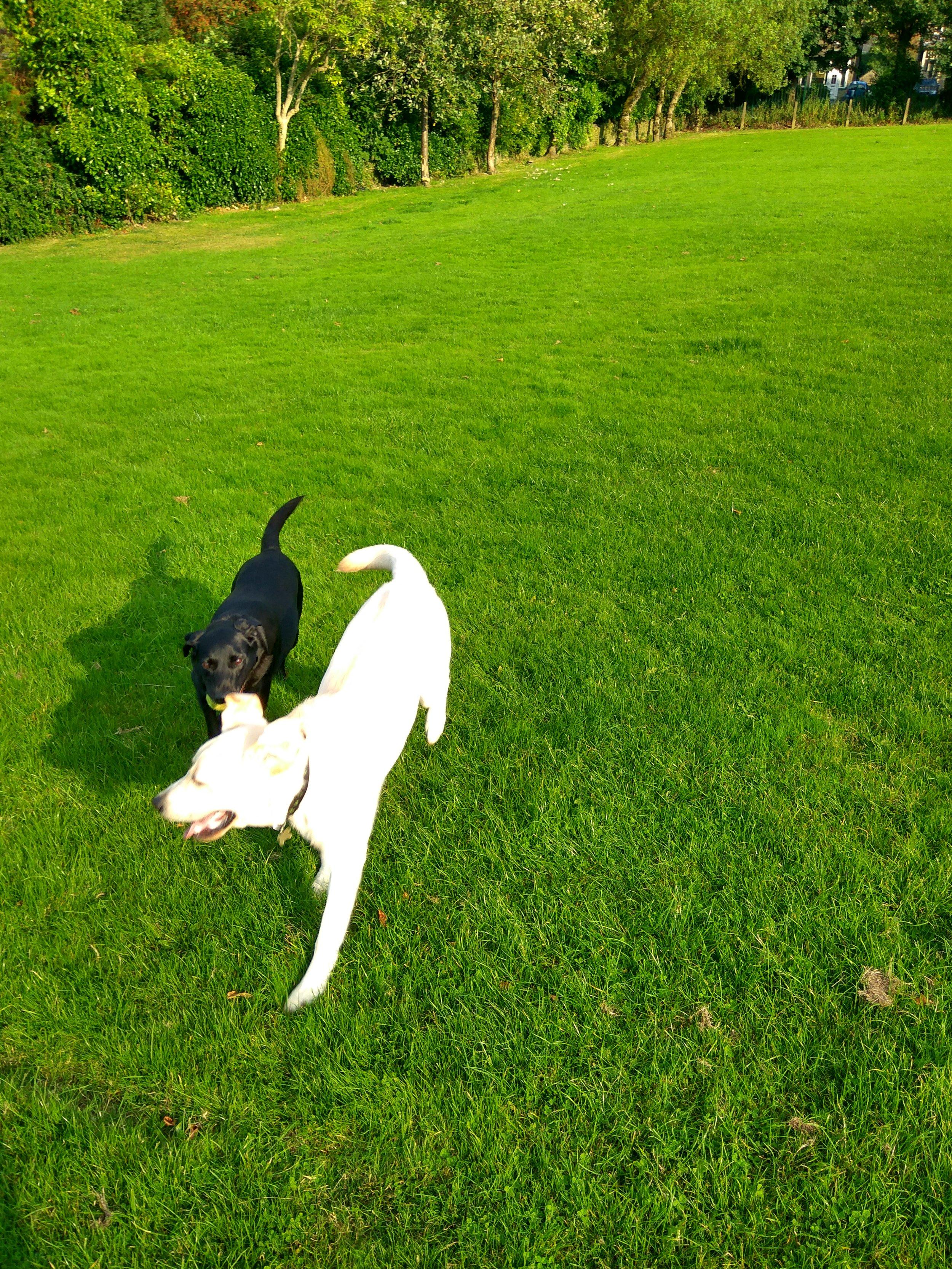 lovely run on the field