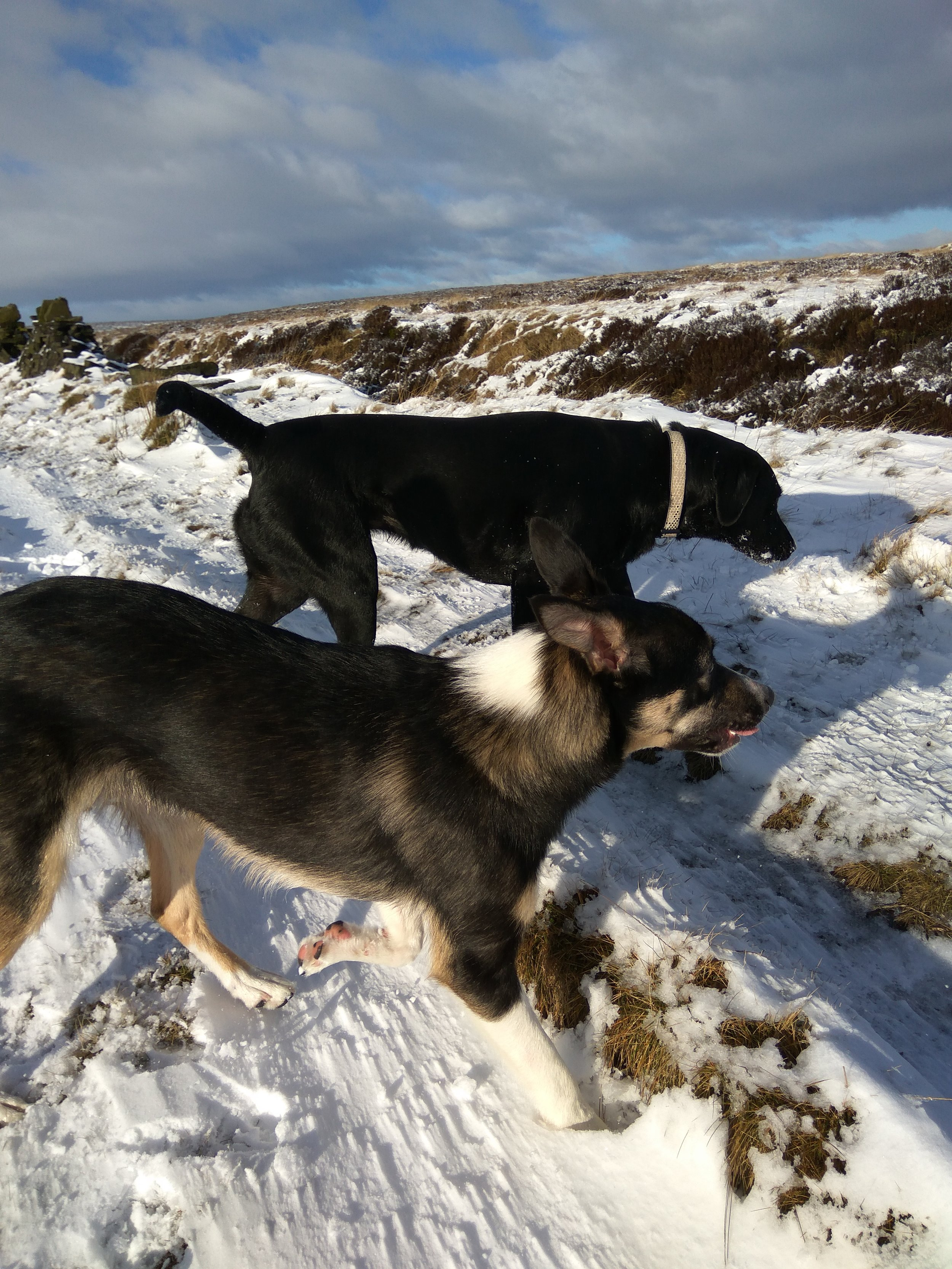 Very windy on the dog walk