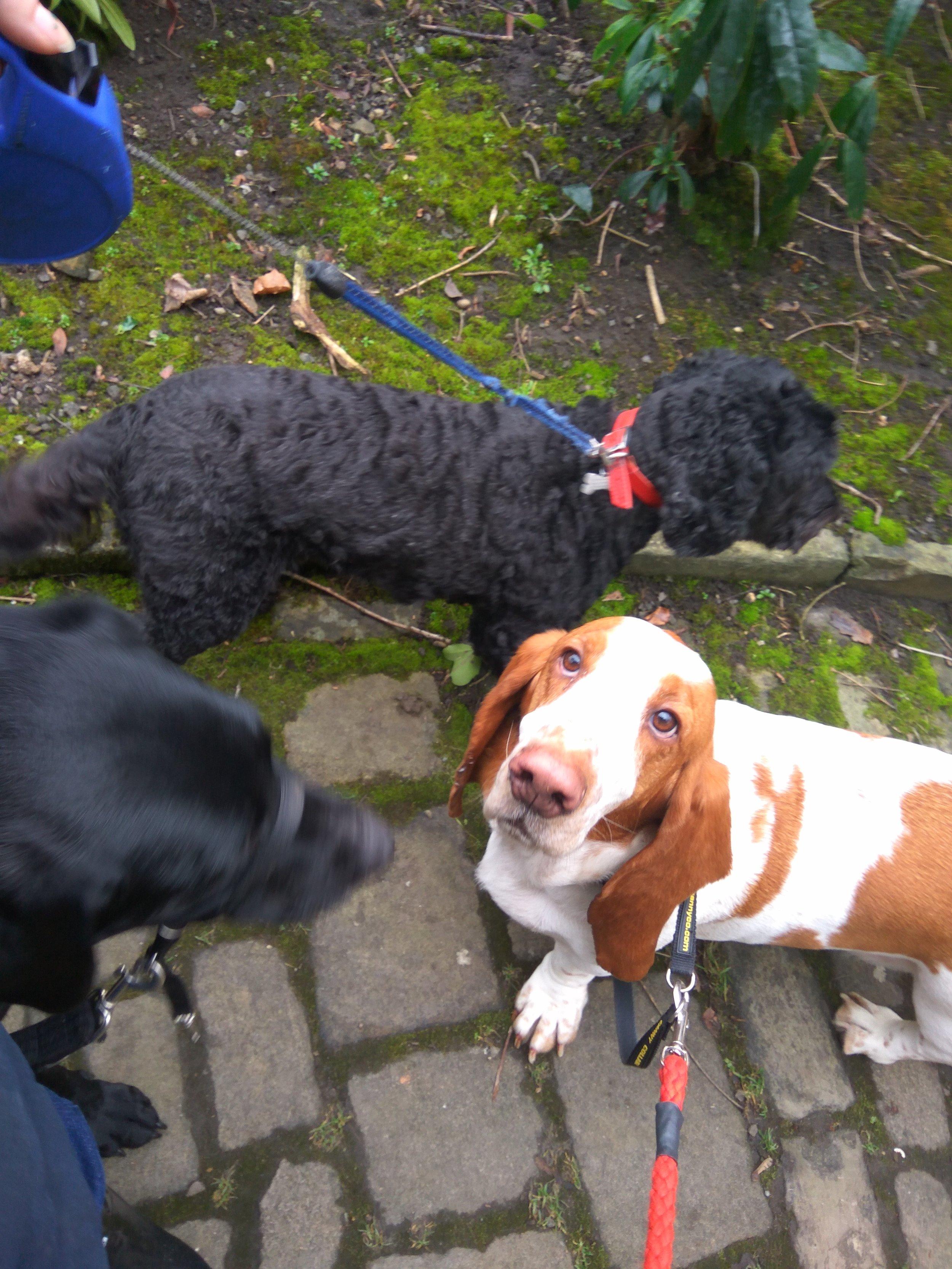 Lola,George and Douglas walking in halifax
