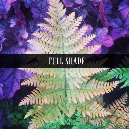 Full Shade Perennials
