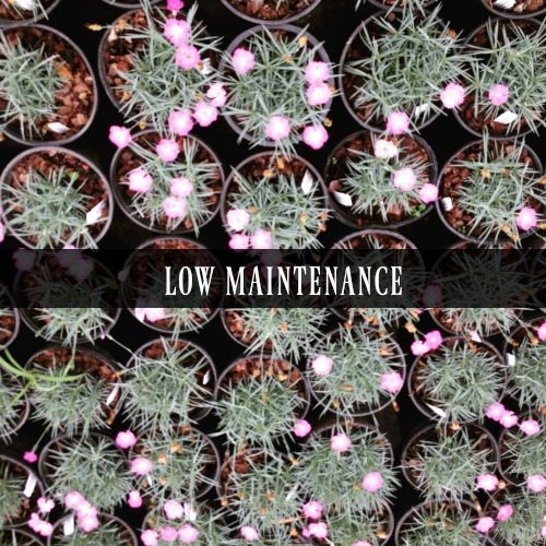 Perennials that are hard to kill and easy to maintain and grow.