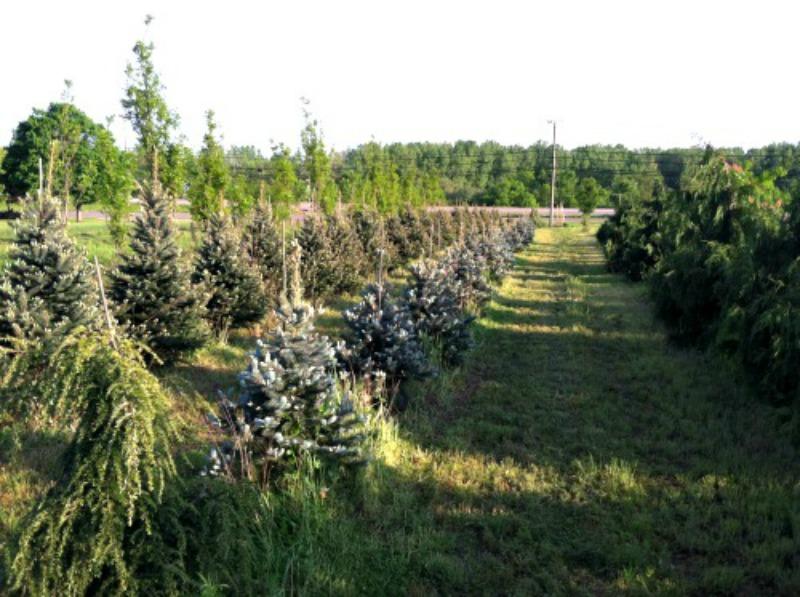 fieldtrees2.jpg