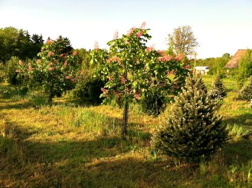 fieldtrees7.jpg