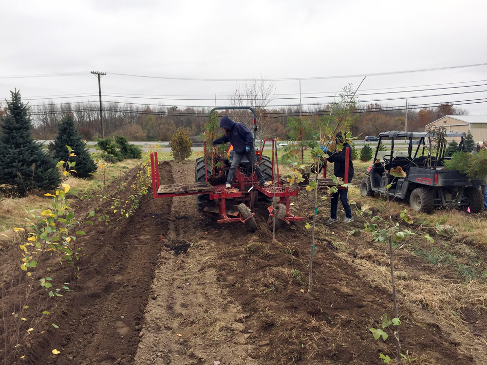 Planting Tree Nursery.jpg