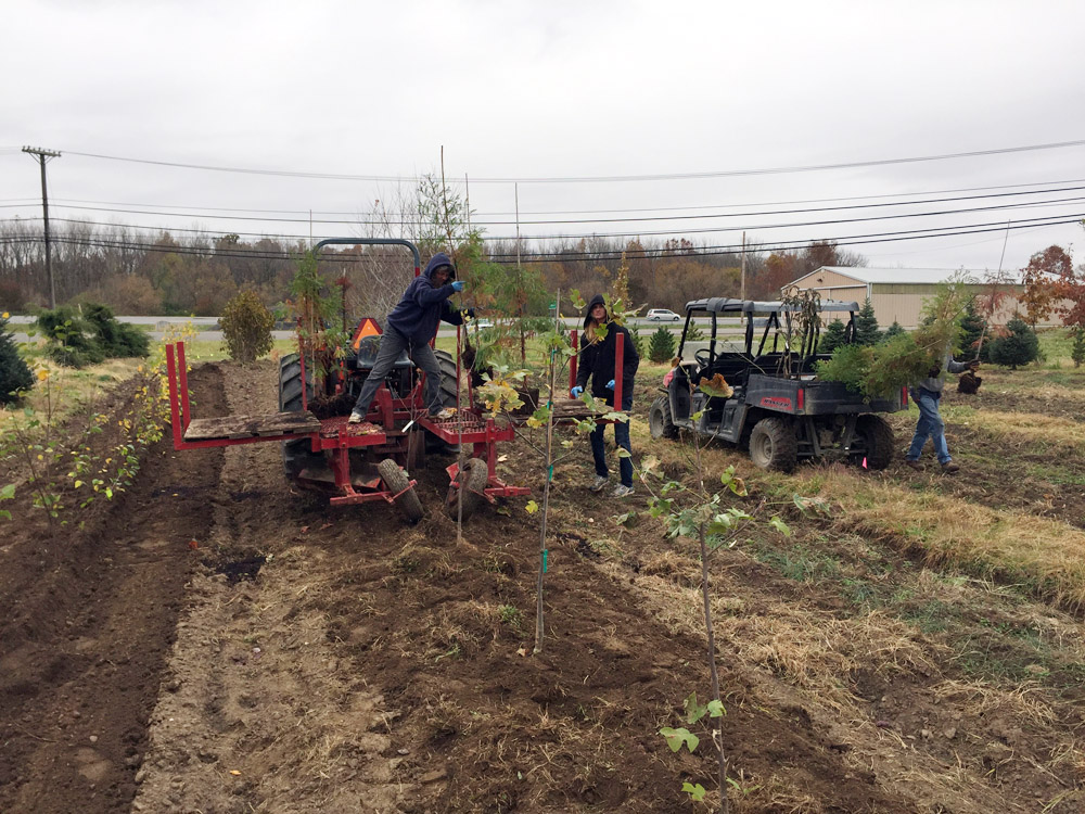 Tree Nursery Planting Process .jpg