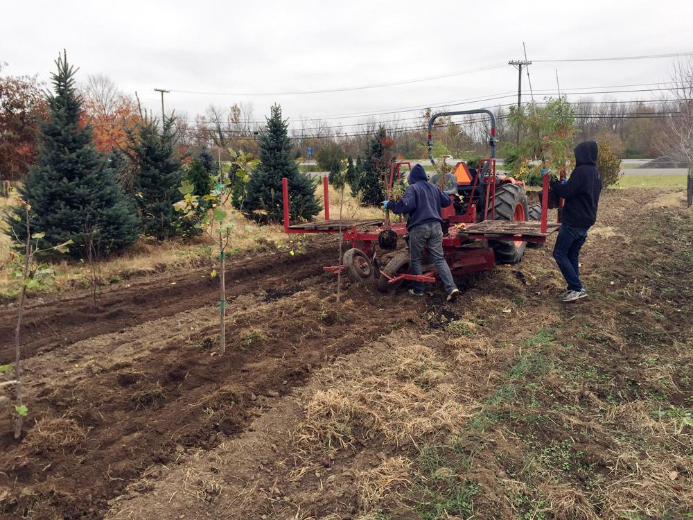 Tree Nursery Planting for winter.jpg