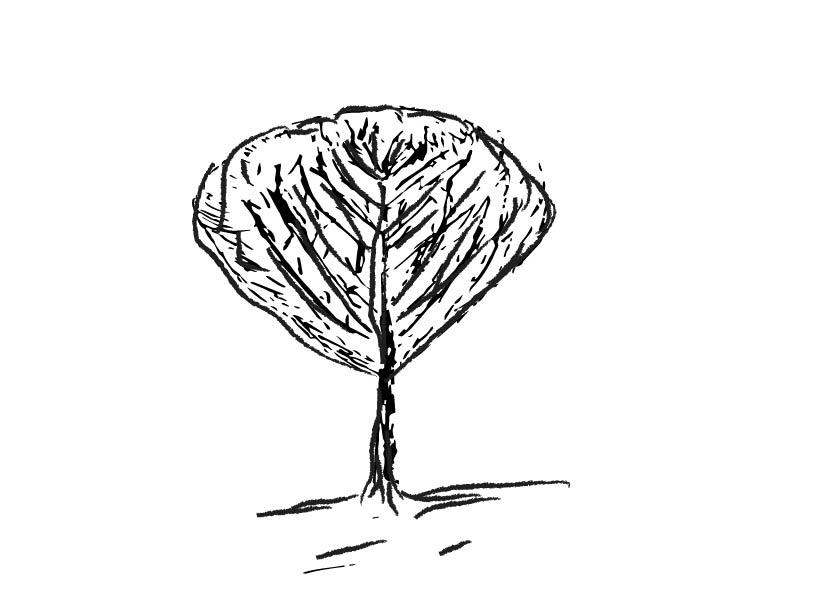 vase shaped ornamental tree image-02.jpg